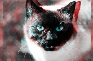 cat-1288972_640 1