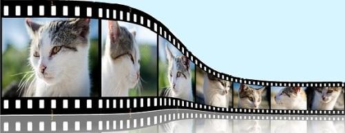 cat-254572_640 2