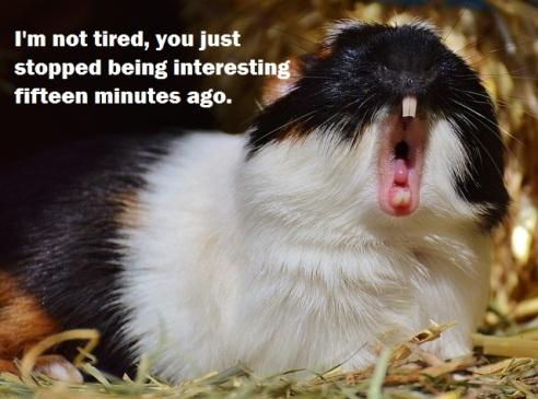guinea-pig-1325841_640 2