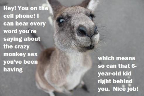 kangaroo-1149807_640 1