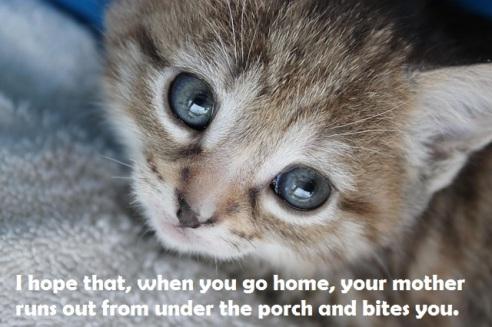 kitten-793652_640 2