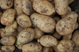 potatoes-1183623_640