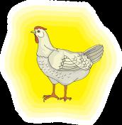 chicken-45944_640
